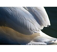 Under the Swans Feathers Photographic Print