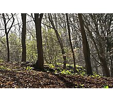The sunlit Forest.. Photographic Print