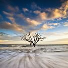 Charleston SC Botany Bay Edisto Island - Alone by Dave Allen
