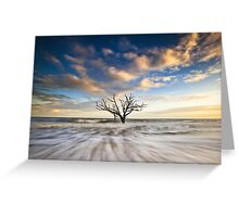 Charleston SC Botany Bay Edisto Island - Alone Greeting Card