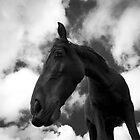 Horse (14)  by Raymond Kerr