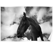 Horse (14)  Poster