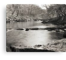 Tree-lined Tranquility Canvas Print