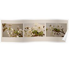 Tri Picture of Blossom Poster
