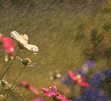 Summer Rain by Darren Fisher