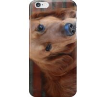 My lovely dog name is Cao Cao曹操 iPhone Case/Skin