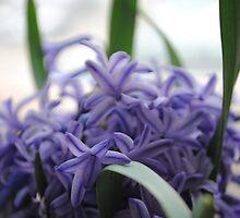 Spring Bloom by Gergana Georgieva