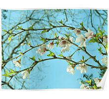 blossom bow Poster