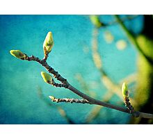 Spring is in the Air Photographic Print