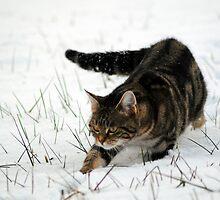 On the prowl by Tony Jones