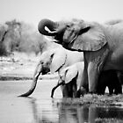 Namibia: Elephants by Nina Papiorek