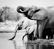 Namibia: Elephants by Nina Papiorek