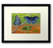 Blue Butterflies - Watercolor Pencil Drawing Framed Print
