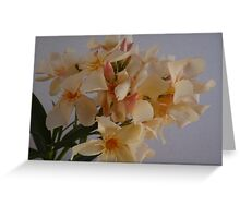 Discreet Colours - Colores Decentes Greeting Card