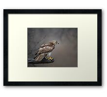 Hawk Encounter  Framed Print