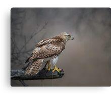 Hawk Encounter  Canvas Print