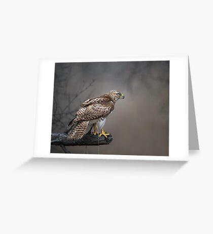 Hawk Encounter  Greeting Card