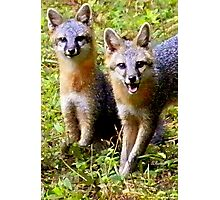 Two Adorable Young Foxes Photographic Print