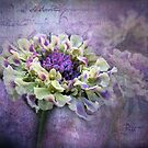 """ Lavender & Lace"" by Melinda Stewart Page"