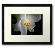 """""""Lily White """" Framed Print"""