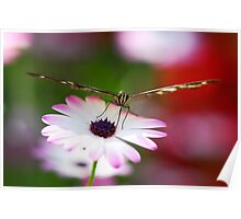 A Passion for Butterflies  Poster
