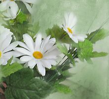 Daisies by Mary  Timman
