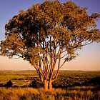 Sunset - tree - Wagga Wagga by naemick