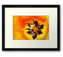Inside of a yellow tulip Framed Print