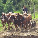 Working The Land by lorilee