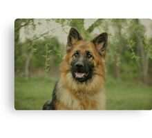 Queena - German Shepherd Canvas Print