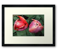 Dynamic Duo - Pretty Tulip Pair Framed Print