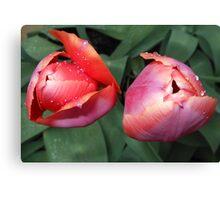 Dynamic Duo - Pretty Tulip Pair Canvas Print