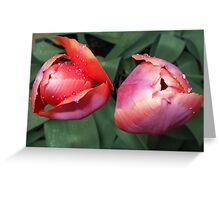 Dynamic Duo - Pretty Tulip Pair Greeting Card