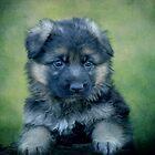Long Coated German Shepherd Puppy by Sandy Keeton
