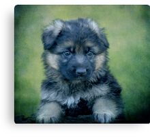 Long Coated German Shepherd Puppy Canvas Print