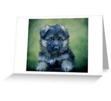 Long Coated German Shepherd Puppy Greeting Card