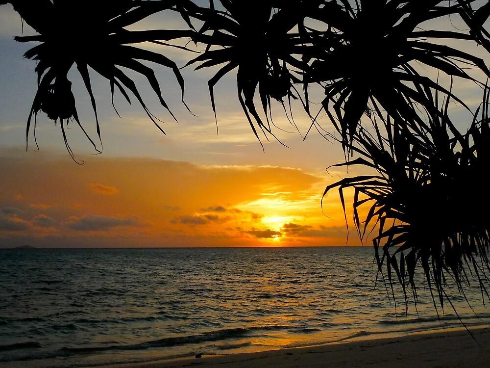 sunrise under the pandanus by supergold
