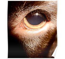 Dogs eye Poster
