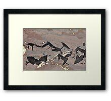 Playful Porpoises Framed Print