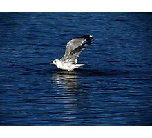Water Landing Photographic Print