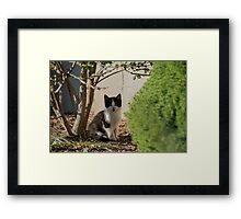 I am just going to sit here Framed Print