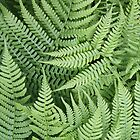 Ferns by Rod J Wood