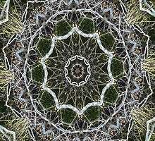 Woods Kalidescope Design by Rosalie Scanlon