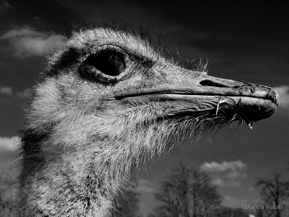 Who are you calling Ostrich? by Marcia Rubin