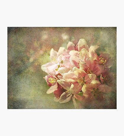 Full Bloom Photographic Print