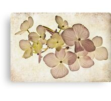 Hydrangea in Pastels Canvas Print
