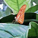 Baby Butterfly by Marcia Rubin