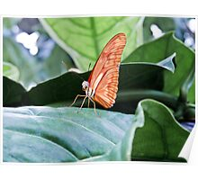 Baby Butterfly Poster
