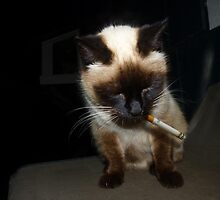 Smoking Cat by Hapatography