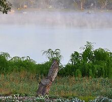 Sunrise on the River Murray @ Mannum, S.A. by bsquared1007